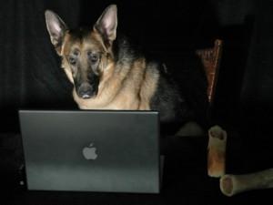 Blog Dog